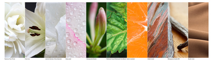 muse_ingredients_images1