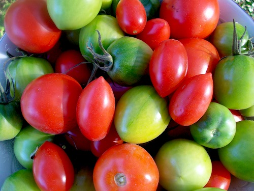 red-and-green-tomatoes